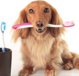 Importancia de la profilaxis dental?