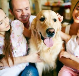 Como introducir una mascota a otra en la familia?