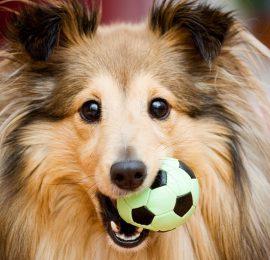 Por que los cachorros muerden todo?