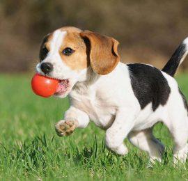 A que edad comienzan a entrenarse las mascotas